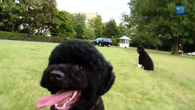 Sunny the dog carries on White House tradition