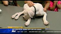 New Leash on Life: Injured puppy goes into surgery