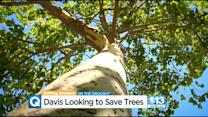 Davis Weighs Solutions For Cutting Water In Drought