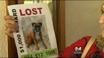 Dognapping Gets Attention Of 40 Florida Families