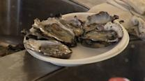 Environmentalists at odds over oysters