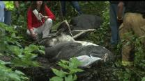 Watch: Officials Rescue Horse Stuck In Mud
