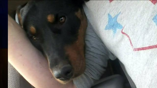 Dog With Broken Leg Rescued From Freeway