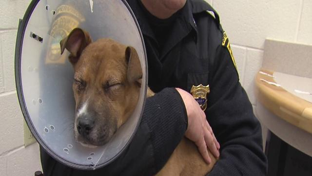 3-month-old pup shot in face recovering
