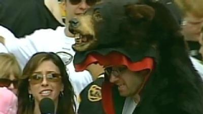 Bruins Fan: Bear Head
