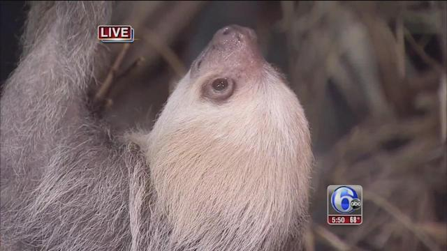 Charlotte the Sloth on Cecily Tynan's Outdoor Adventure
