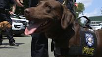 NYPD K9s: 'The Last Line of Defense'