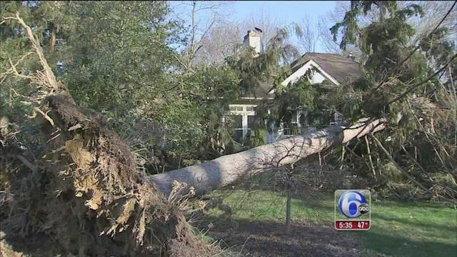 Wild winds bring down trees in Abington