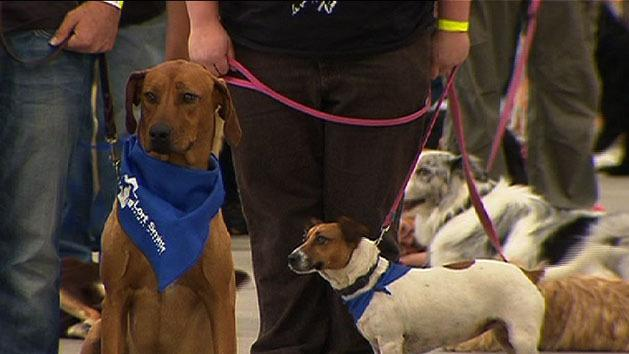 Dogs day out smashes record
