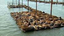 "Beach balls used to ""scare"" Oregon sea lions"