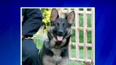 Police Dog Dies After Being Left In Hot Cruiser