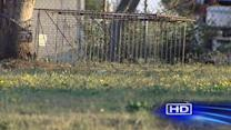 Galveston residents concerned about coyote attacks