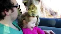 Watch: Little girl's close encounter with a camel