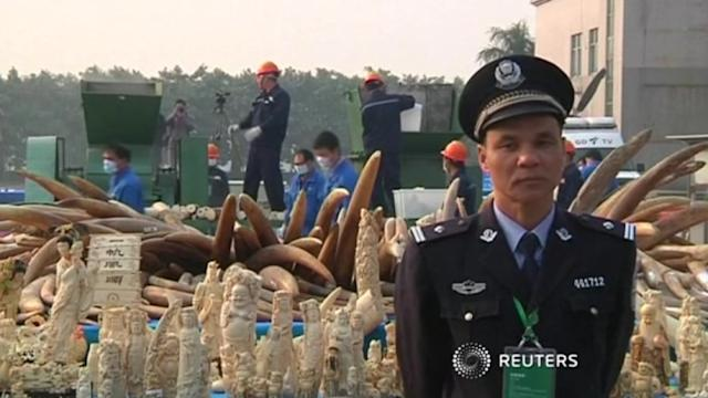 China publicly destroys ivory tusks to discourage illegal trade