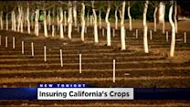 Crop Insurance A Necessity For California Farmers As Drought Disaster Rolls On