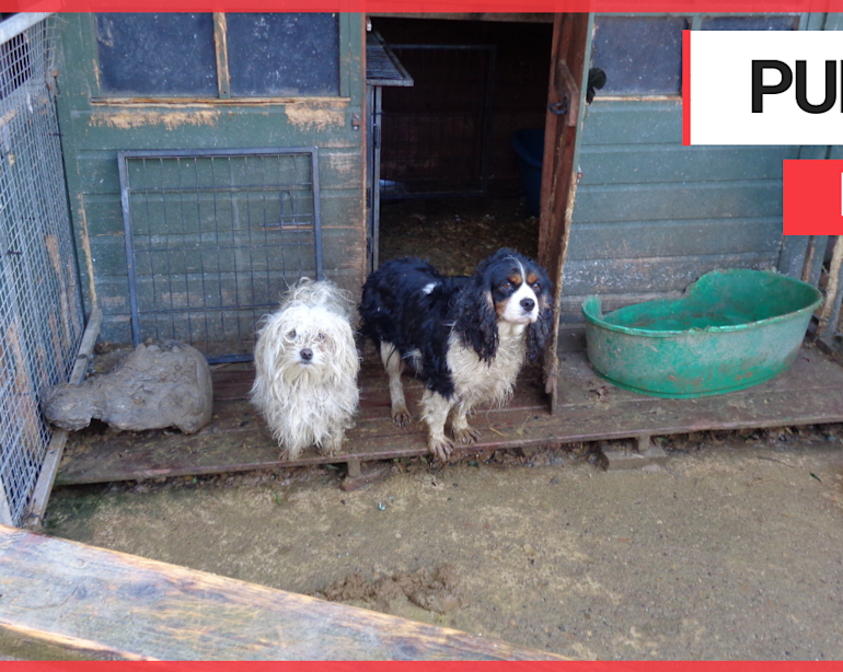 Dogs and cats held in filthy pens at 'pet farm'