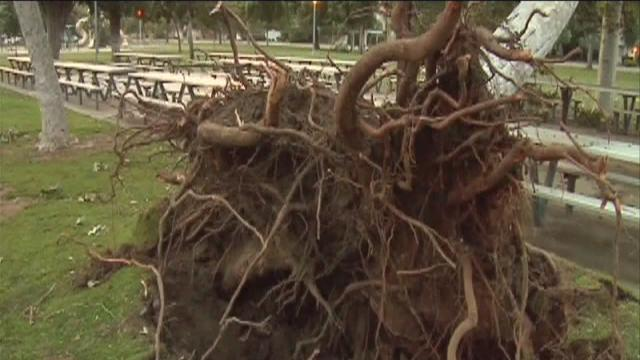Strong winds blow through Bakersfield, Kern County