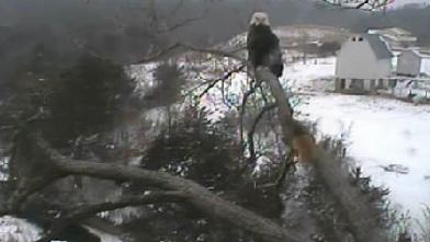 Brave Squirrel Challenges Eagle