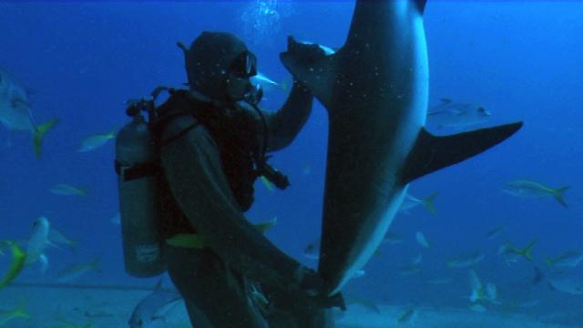 Diver Puts Sharks In Trance