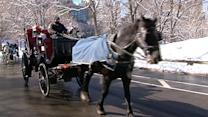 Horse-Drawn Carriages Under Fire in NYC Mayoral Race
