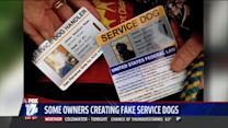 Some Dog Owners Creating Fake Service Dog Licenses