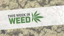 Recreational pot in Oregon, Rand Paul and the First Church of Cannabis: This Week in Weed