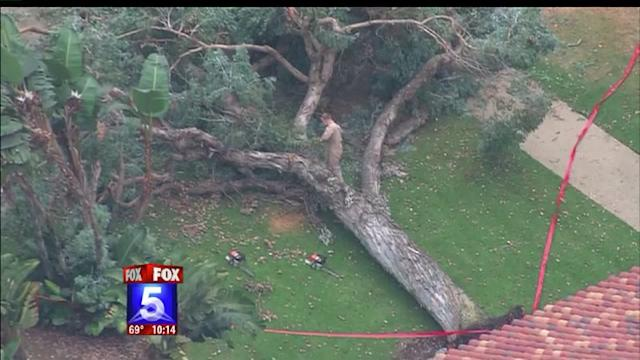 Tree Topples Over Civilians At MCRD
