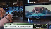 Dog TV: The newest breed of programming