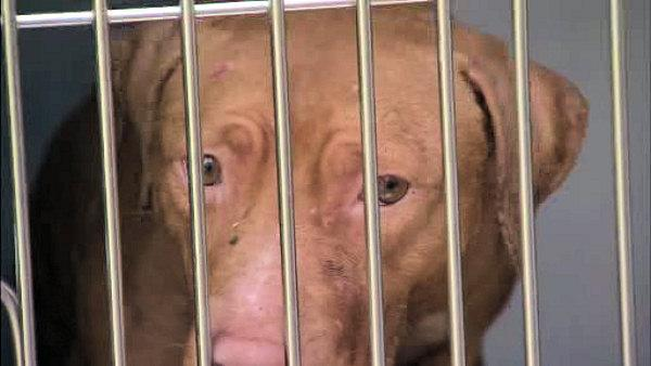 Suspect in custody after dog raid in Philadelphia