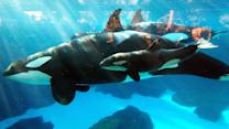 This could save SeaWorld