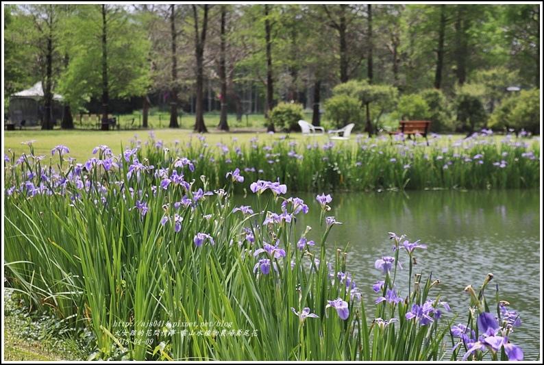 雲山水植物農場鳶尾花-2018-04-05.jpg
