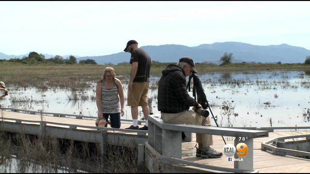 Storms Replenish Santa Rosa Plateau's Vernal Pools