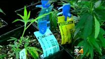 Lawmakers Want More Money To Try To Stop Use Of Unapproved Pesticides In Pot Growing
