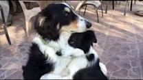 Dog Best Buds Hug It Out