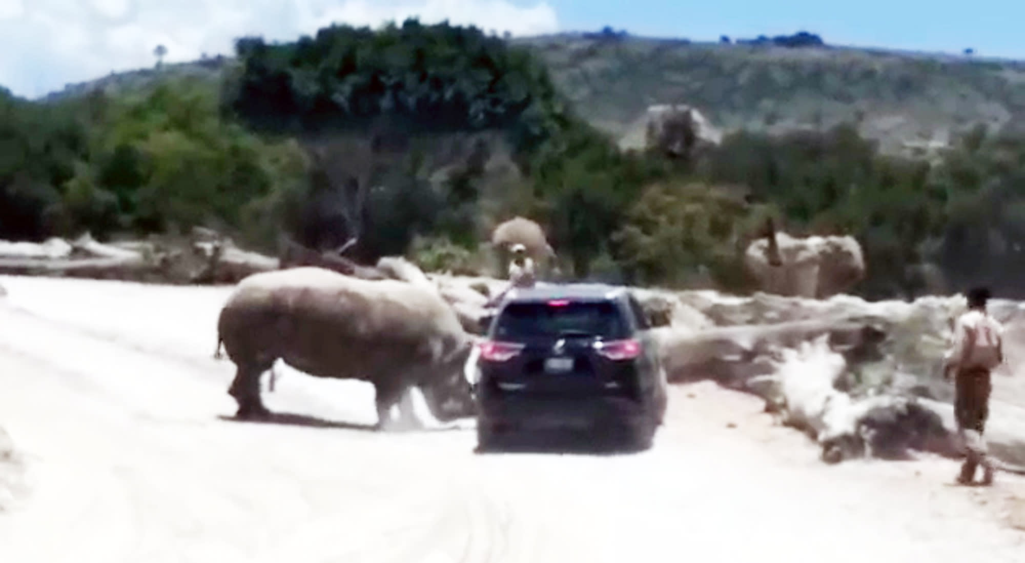 The rhino rammed the car repeatedly with its horn (CEN)