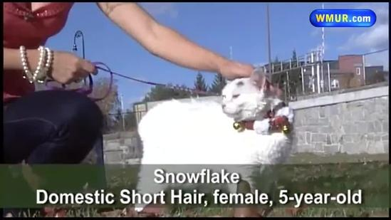 Adopt This Pet: Snowflake