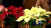 Carrie answers holiday-related plant questions