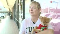 The Flu and Fido: Protecting Your Pet