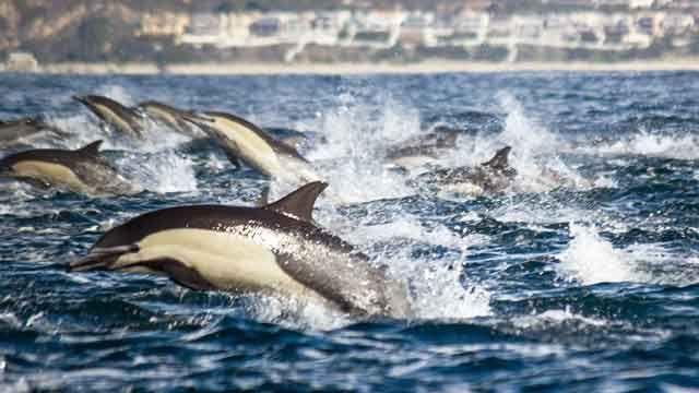 Dolphin stampede caught on tape