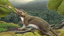 Tragedy for Dinosaurs, Opportunity for Mammals