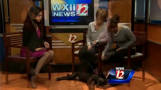Pet Of The Week: Symphony and Veola