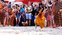 The Annual World Hen Racing Championships