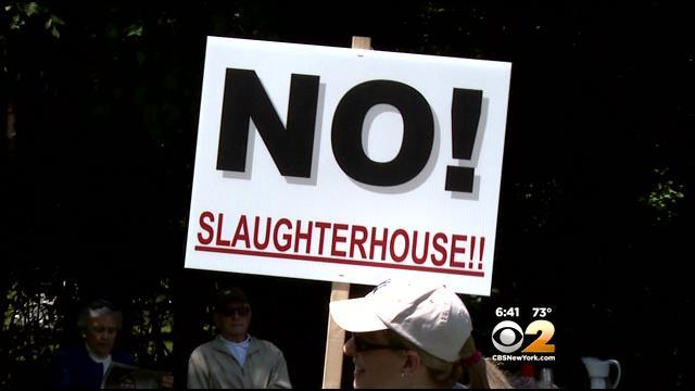 Community Protests Planned Kosher Slaughter House