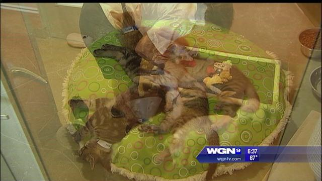 125 pets adopted during adopt-a-thon