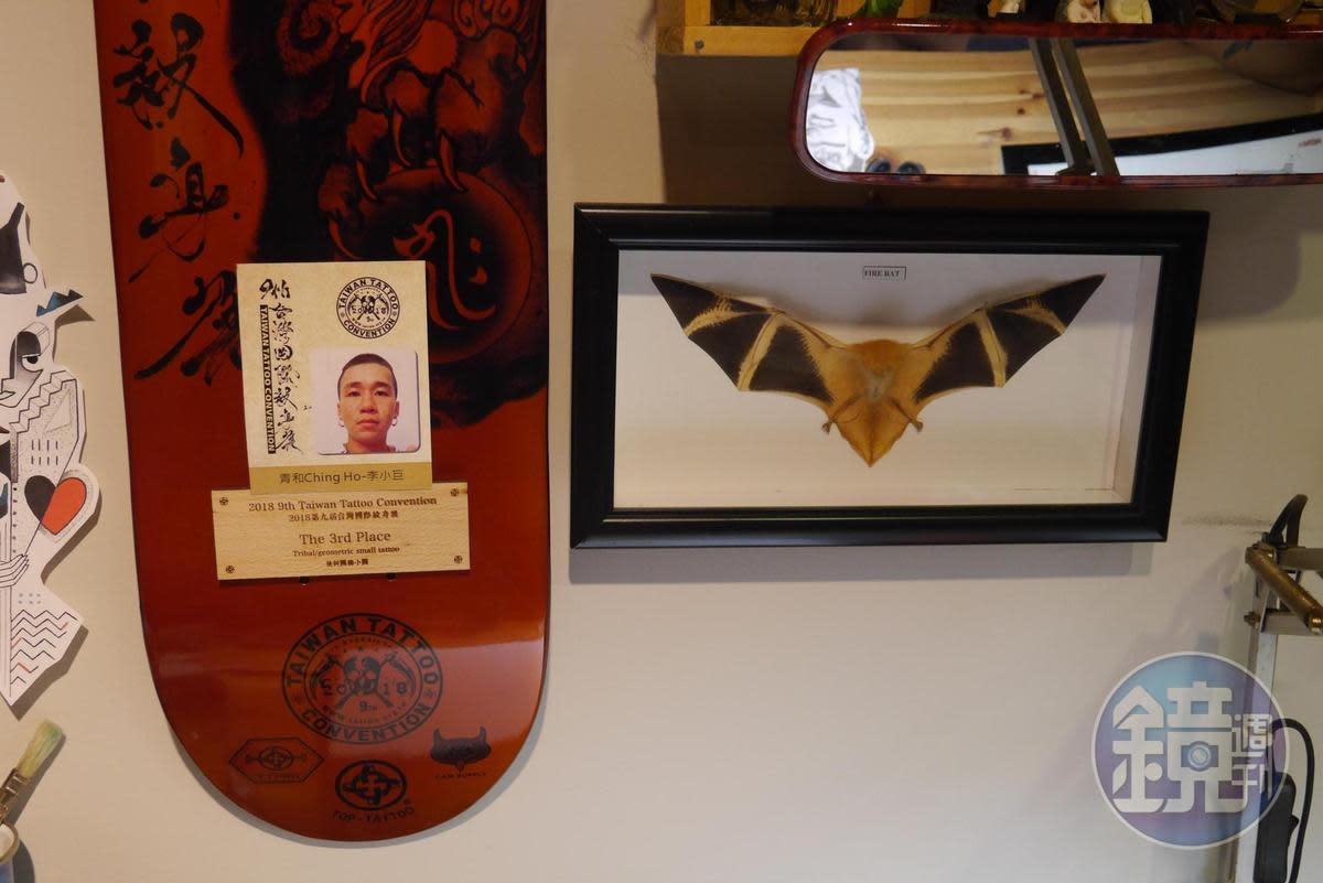 台灣國際刺青展的獎牌是以滑板的樣子去做的,小巨不好意思地說這是他目前唯一得過的獎,跟各種收藏品一起掛在工作桌前的牆上。