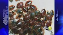 Bed Bug infestation at Olmos Elementary School and a nearby apartment complex in Southeast Fresno