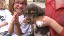 Summer Camps: Critter Camp Teaches Kids Pet Responsibility
