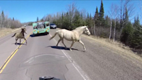 An Unlikely Traffic Stop Captured in the Wilderness