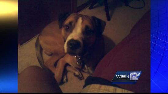 Boy shoots dog to stop attack