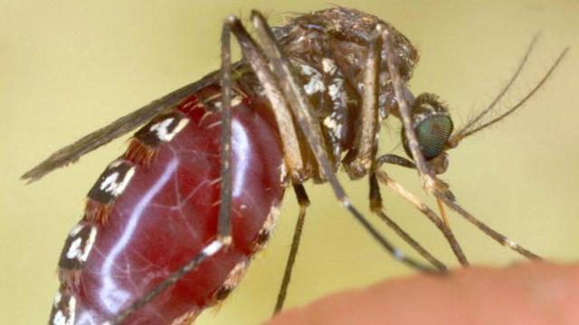 MOSQUITOS CHOOSE VICTIMS BY 'SMELL'